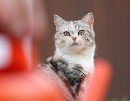 Bijou & Pünktli unsere beiden Hauskatzen